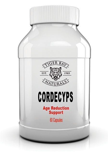Age Reducing Cordyceps Mushroom is used for strengthening the immune system, improving athletic performance, reducing the effects of aging, promoting longer life, and improving liver function in people with hepatitis B.